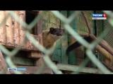 Уссурийская харза- детективная история с побегом и хеппи-ендом
