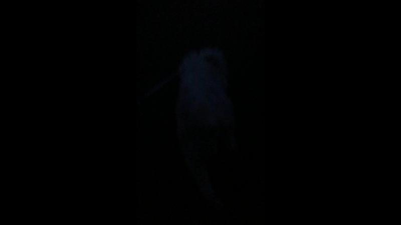 Ксения Киреева - Live