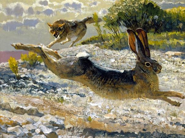 Пять главных заблуждений о волках. Волкам, издавна обитающим по соседству с человеком, во все времена приписывалось множество «нехорошестей». Например, в средние века полагали, что плоть волка