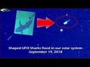 НЛО в форме Акулы зафиксировано в нашей солнечной системе - 19 сентября 2018