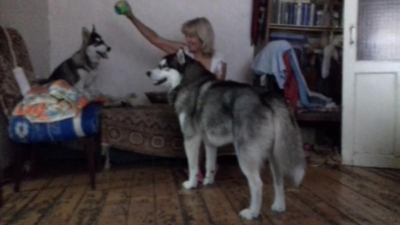 Волчата)♡