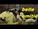 Il S'endort Sur Sa Vache Au Salon De L'Agriculture L'image Fait Le Buzz