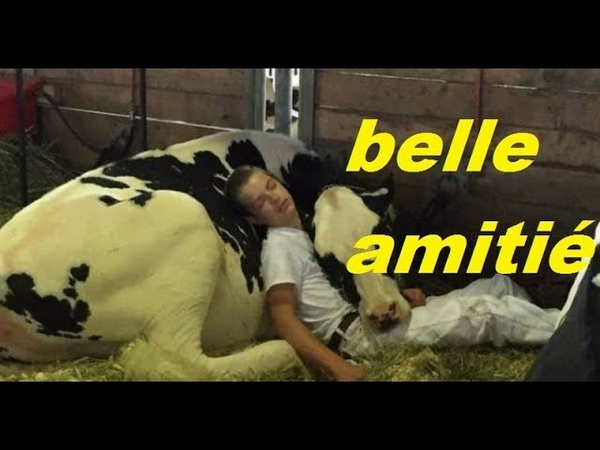 Il S'endort Sur Sa Vache Au Salon De L'Agriculture, L'image Fait Le Buzz