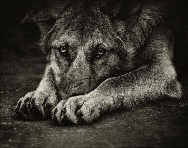 Меня поражают люди, способные предать, а потом вести себя так будто это ты их пр...