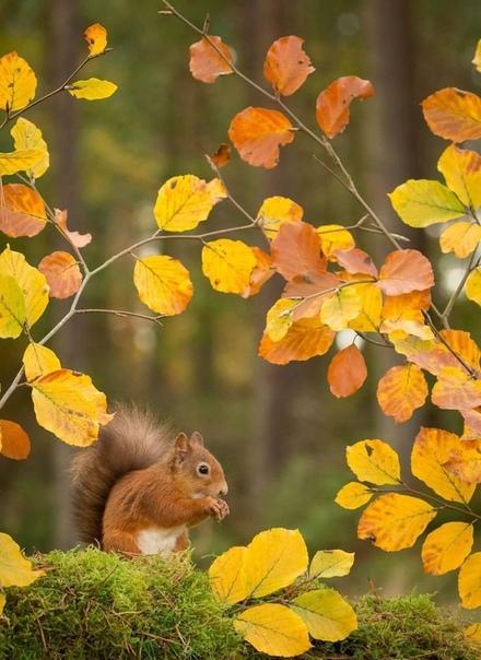 Осень чувствует счастье! Просто она самая красивая.
