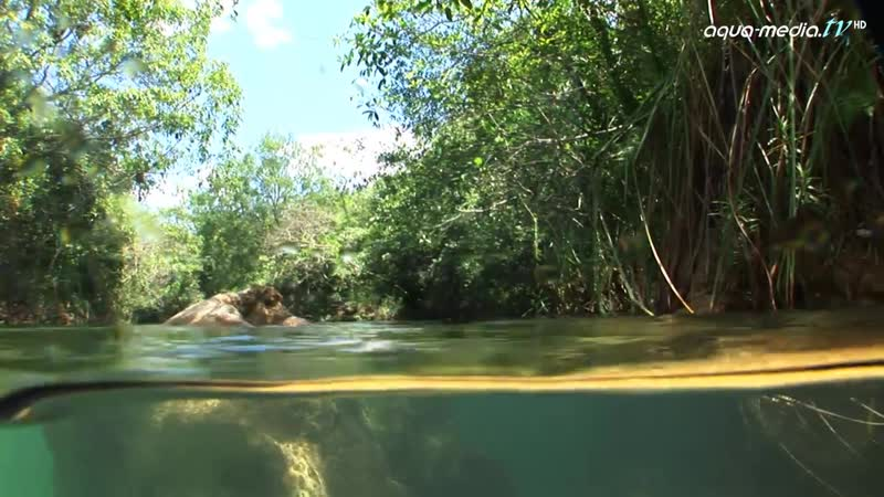 BIOTOP - Brycon hilarii, Brasilien