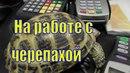 Работящая черепаха/Как черепаха поехала на работу