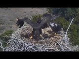 Sauces Eagle Cam - #1 Corsair Flys Above Nest! :) in Slo Mo - 5/20/18