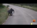 Остановите все и посмотрите, как этот слоненок играет с птицами