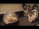 приколы_с_животными_смешные_приколы_смотреть_приколы_онлайн_видео_про_котов - Приколы на media-ninja