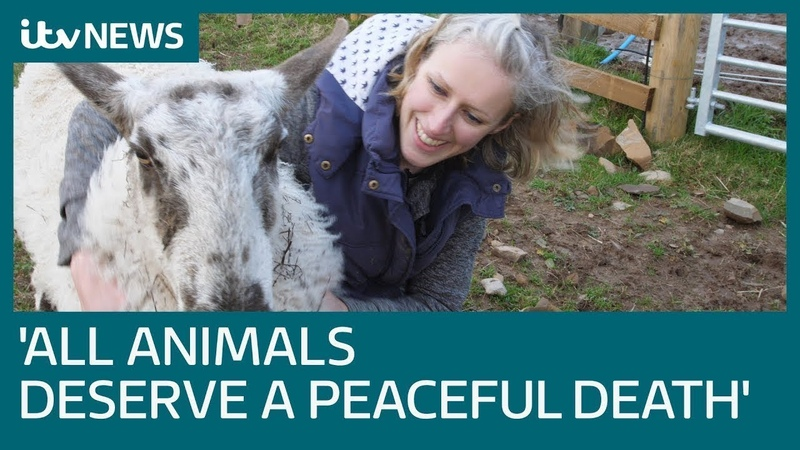 The woman giving care to terminally ill animals - while defying death herself | ITV News