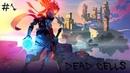 Играем в Dead Cells 1 )