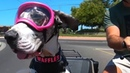 Dogs Ride In Motorcycle Sidecar The Coolest Biker Dudes You will Ever See