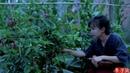 How do Chinese people use passion fruits? 吃法一抓一大把,浸润夏天的沁凉果味——百香果