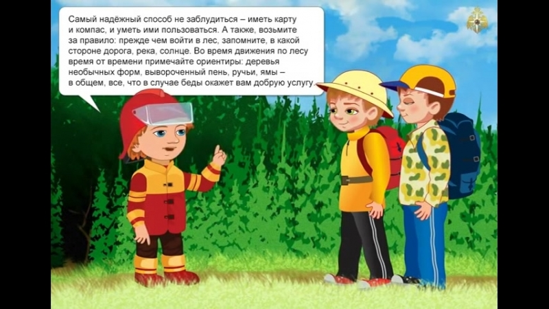 Pravila povedenia v lesu