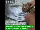 Полицейский провел реанимация детенышу леопарда