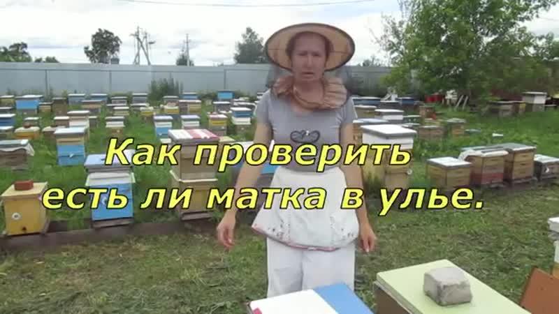 Как узнать есть ли матка в улье (Контрольная рамка). мед.