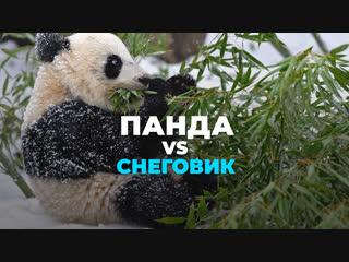 Панда vs снеговик