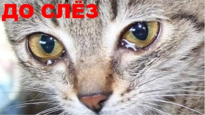 🔴ДО СЛЕЗ / Бездомный (Кот) который Изменит Вашу Жизнь.