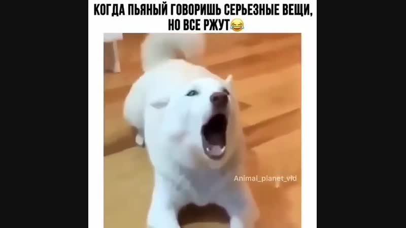 Когда ты пьяненький (хорошее настроение, юмор, смешное домашнее видео, собака гавкает, лает, дом, семья, комфорт, пьянка).