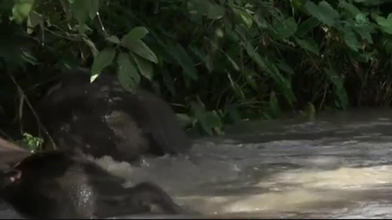 Таиланд. Слоны, которых освободили из туристического рабства.