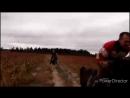 Horses galop v pole