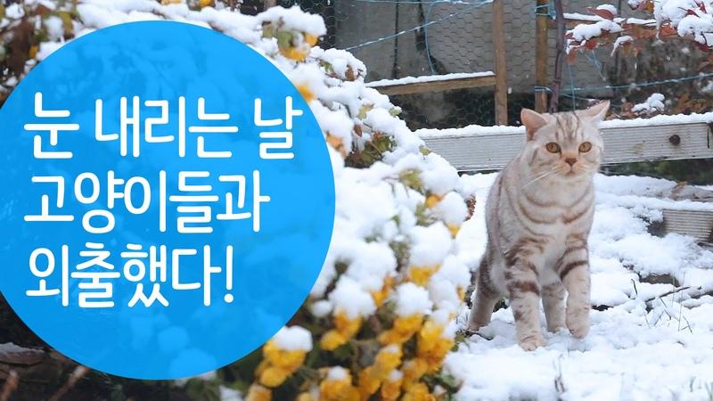 눈내리는 날에 고양이들과 외출했다.Cats see snow for the first time 雪の降る日に猫たちと外出