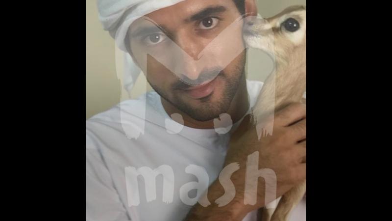 Наследный принц Дубая спасает животных и помогает людям