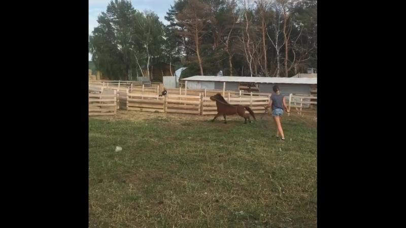 Любым животным нужно заниматься. Для работы с пони мы пригласили берейтора из Тулы Алину. Надеемся, что теперь наша поняша стане