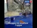 Дельфин и выдра: животные-оракулы предсказали исход первого матча ЧМ-2018 в Сочи