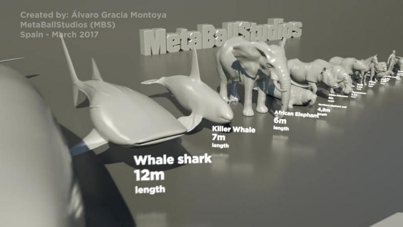 Animals size comparison