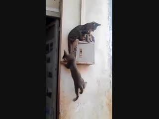 Кот_даже если ниша занята