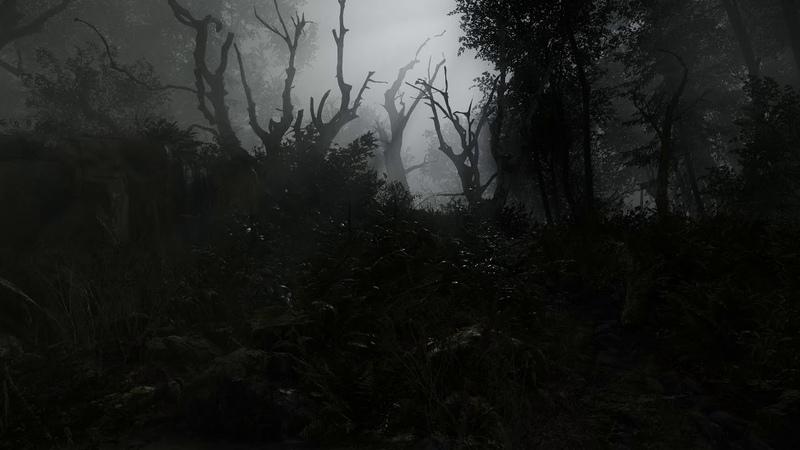Dark Vale Forest
