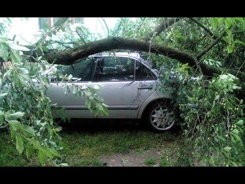 Страшный ураган парализовал движение транспорта и валил деревья в Луцке