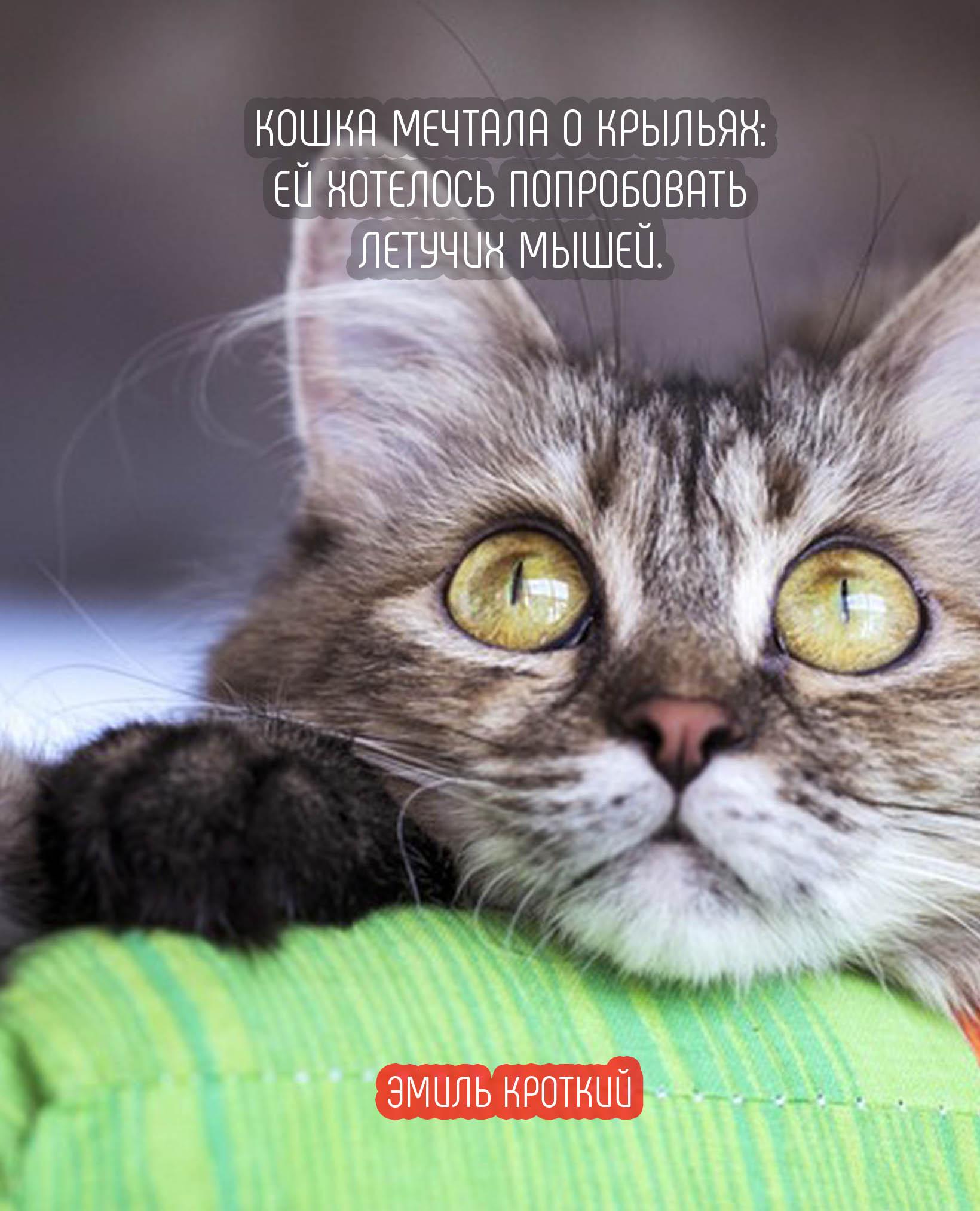 Статусы с картинками в с кошками