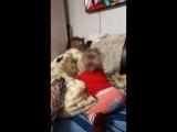 амир с сафиной на диване