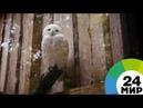 Волк с птичьего рынка что происходит с дикими животными в Москве - МИР 24