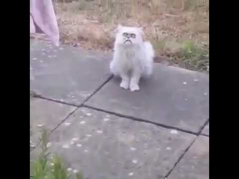 Мам тут странный кот