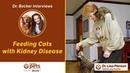 Кормление кошек с почечной недостаточностью Feeding Cats with Kidney Disease