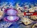 Рекламный блок (REN-TV, 20.05.2006) (1)
