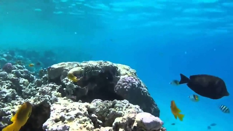 Музыка релакс - красоты океанских глубин. Релакс музыка океан супер отдых дома.