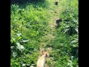 Наши звери на прогулке