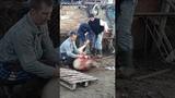 Как в Крыму режут или Коля свиней