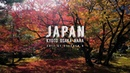 Japan Autumn Tour Kyoto Osaka Nara 4K Sony A6500 Zhiyun Crane M DJI Mavic Pro