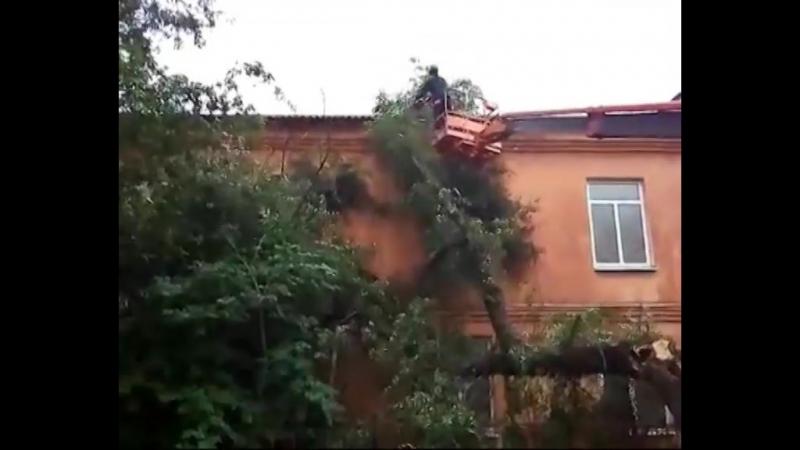 ЧП в Ярославле: дерево упало на спортшколу