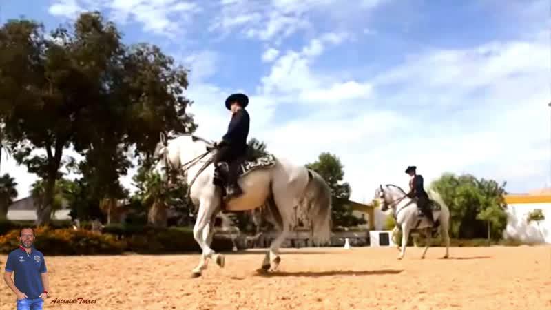 Испанские лошади - Antonio Torres - Caballos españoles