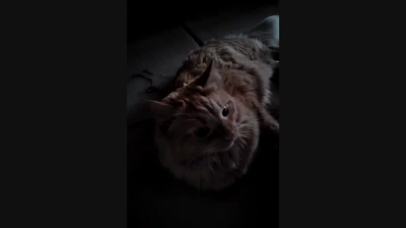 котя мяу котя мур котя кыс