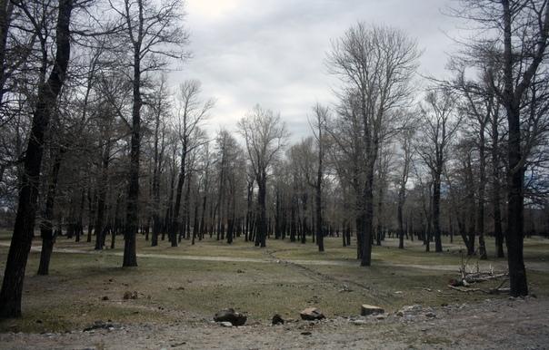 Парк в посёлке Чаган-Узун.