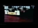 Адская кошка 50 Реальное ТВ животные фелинология 2014