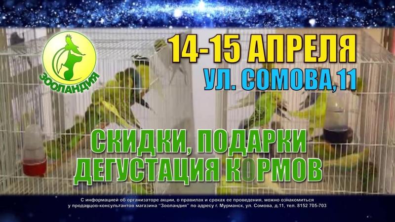 День рождения ЗООЛАНДИИ на ул.Сомова 11